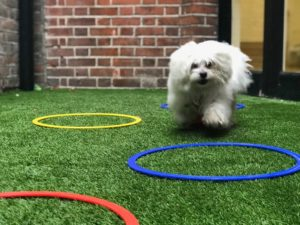 maltese-dog-nursery