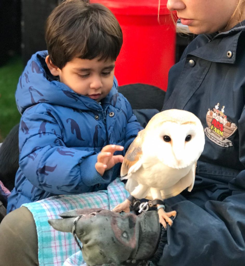 child-playing-with-owl